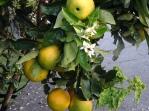 Oranges Espacio Antares