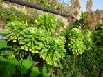 Espacio Antares garden