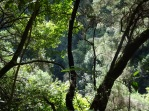 Los Tilos Forest