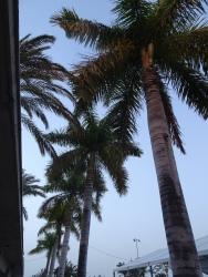 Palm tree offer shade in San Sebastian