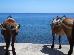 Alicudi donkeys