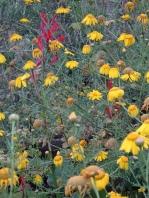 Wild flowers Salina