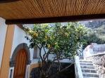 B+B Luca lemon tree