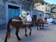 Donkeys carrying building materials