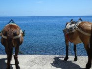 Donkeys waiting patiently