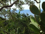 Green and fertile island