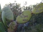prickly pear carvings