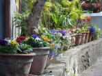 Flower pots at the German church