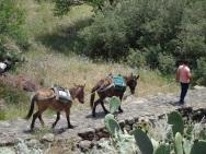 Pietro's donkeys