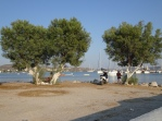 Tamarisks + fishermen