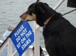 Dogs allowed on board!