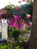 Pollonia garden