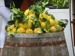 Lemons everywhere!
