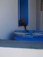 Chorio cat and well