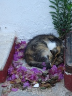 Cat in bougainvillea