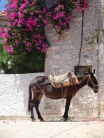 Mule parking