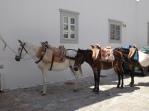 More mule parking