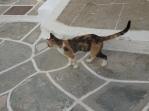 Kastro cat
