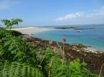 Shell beach and bracken
