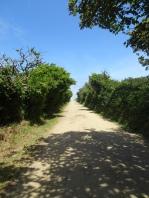 Little Sark road