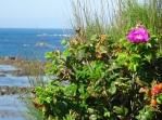 sea & flowers