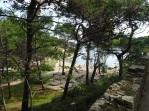 Cikat trees