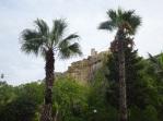 Palm trees in Birgu