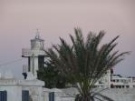 lighthouse + palm