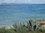 Aloes on the shore